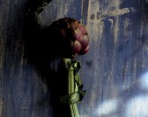 blue-artichoke